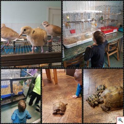 loodusmuuseum