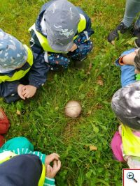 seeni uurimas