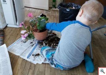 lilli kasvatamas väike